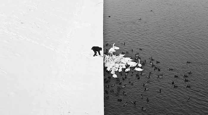 A high-contrast photograph of ducks and swans being fed from a snowy river bank in Krakow, Poland