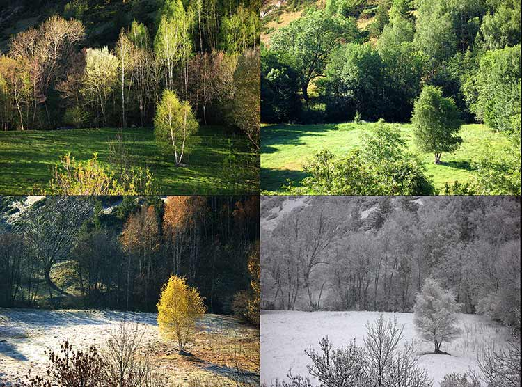 A photograph of a tree shown in four different seasons