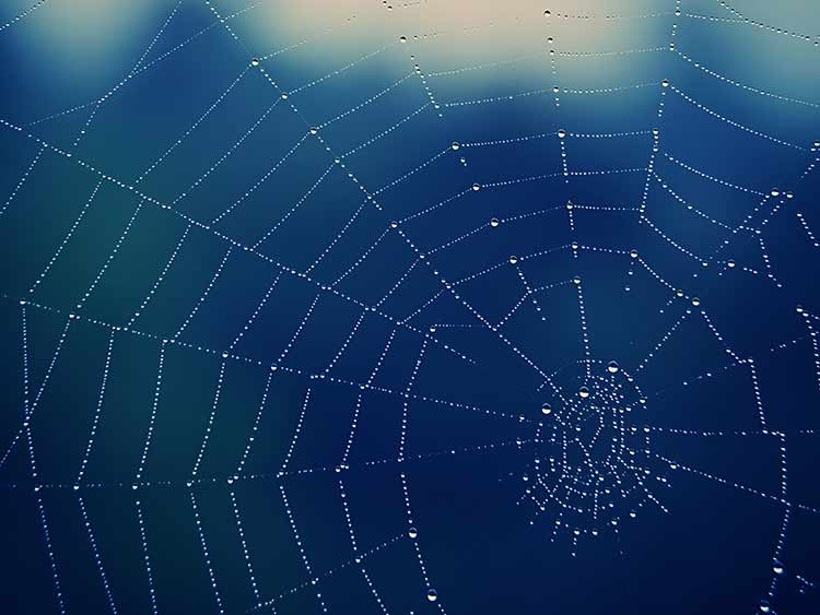 Photograph of a spiderweb against a blurry blue background