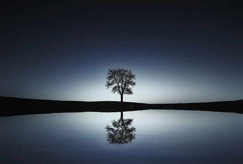 A lone tree at night, with a reflecting lake in front and the night sky behind