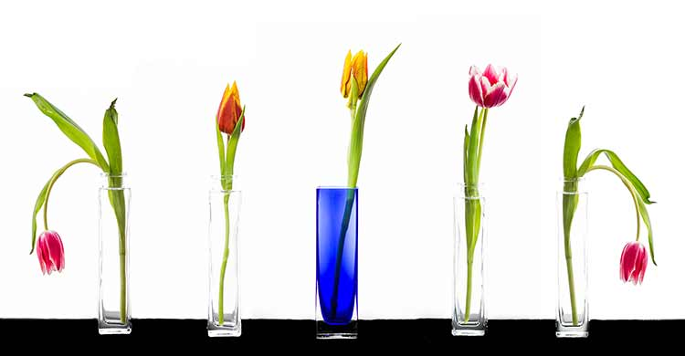 A row of tulips in simple vases